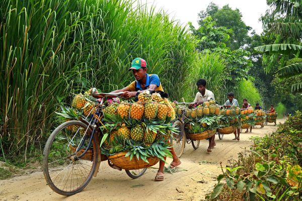 Pineapple Carrier thumbnail