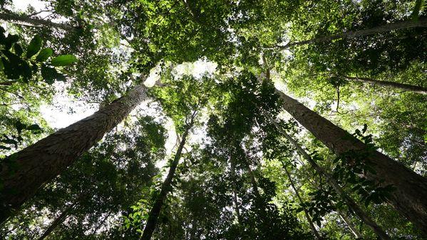 The sanctuary of giant trees thumbnail