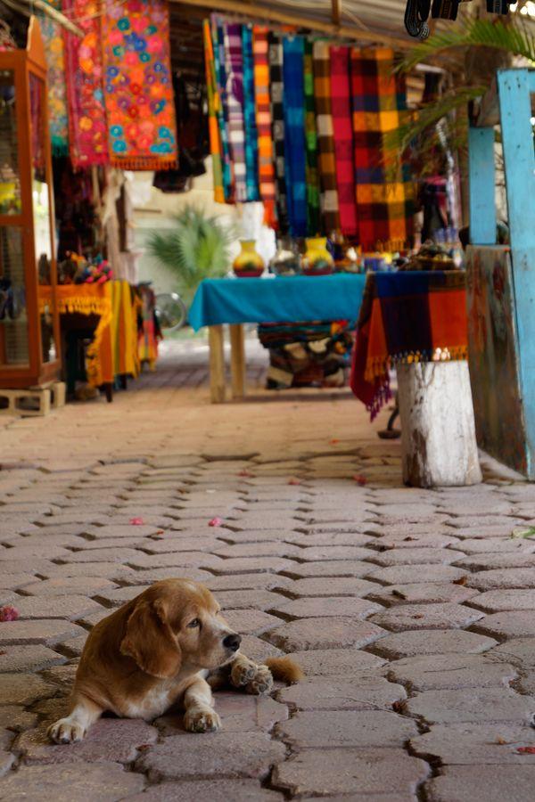 Dog guards the flea market thumbnail