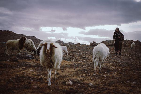 Fatima and the sheep thumbnail