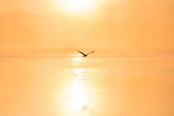 Bird over the lake thumbnail