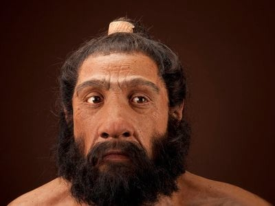 Neanderthals, our closest human ancestor,went extinct 35,000 to 40,000 years ago.