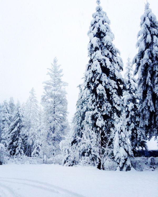 Snow Days thumbnail