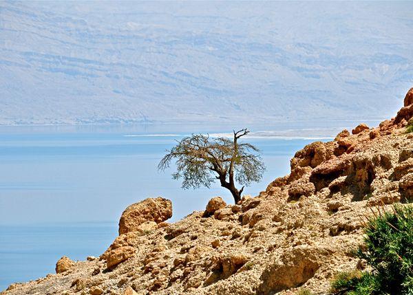 Tree near Dead Sea thumbnail