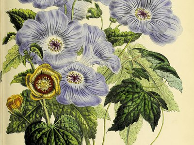 Mrs. Jane Loudon's The Ladies' Flower-Garden of Ornamental Greenhouse Plants (1848)