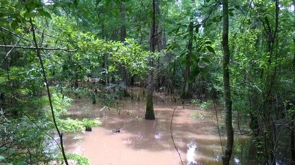 Swampy Scene thumbnail
