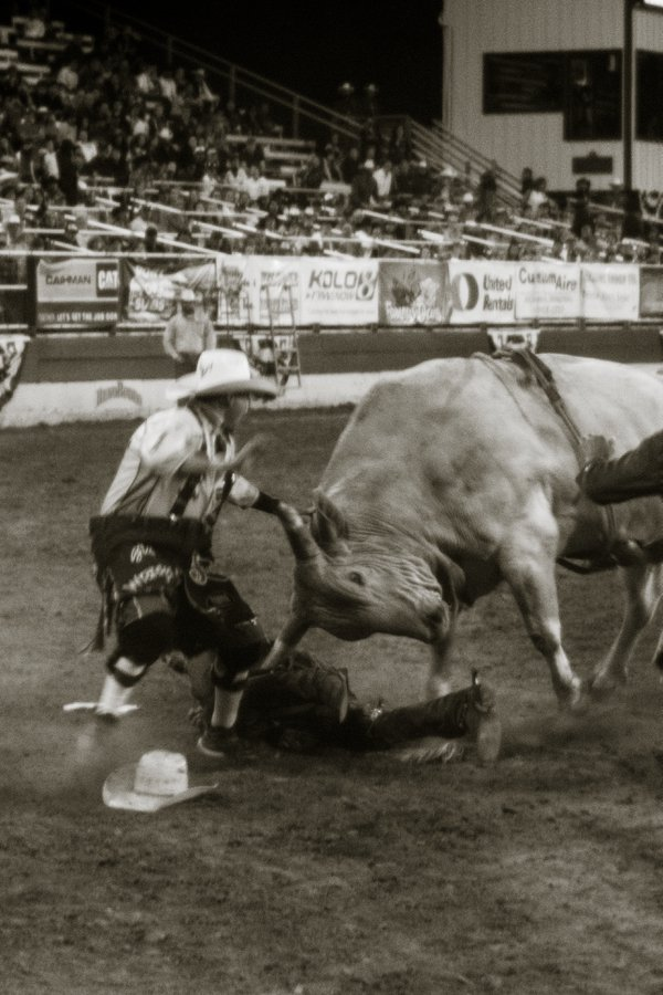 Rodeo clown tries to save a bull rider  thumbnail
