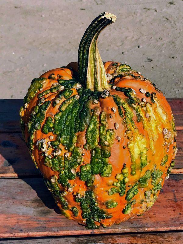 Perfect Pumpkin thumbnail