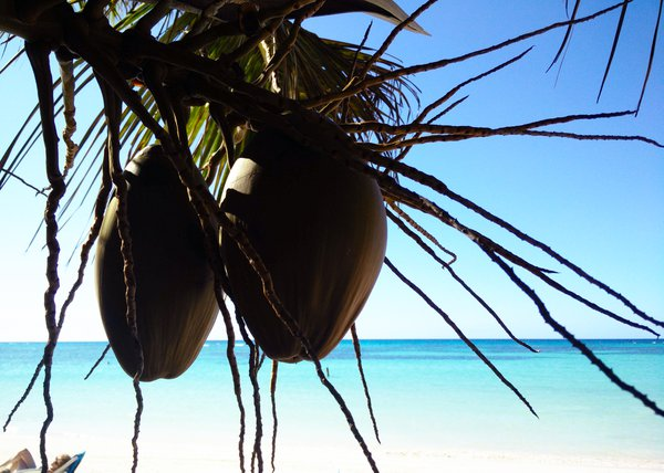 A Lovely Pair of Coconuts thumbnail