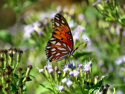 The Gulf fritillary butterfly is one of many that call the sanctuary home.