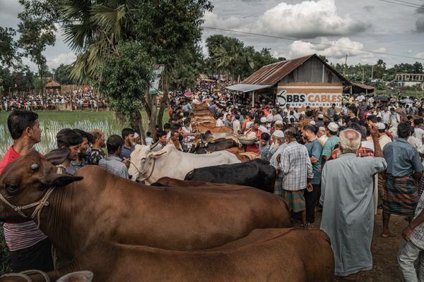 Bull market thumbnail