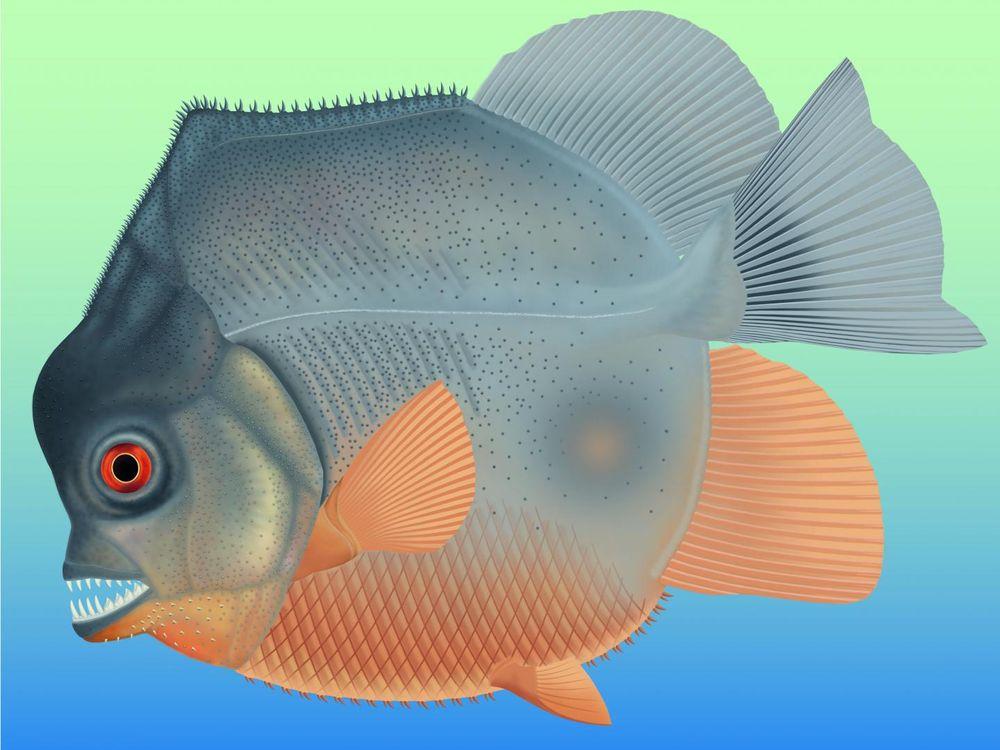 Flesh Eating Fish