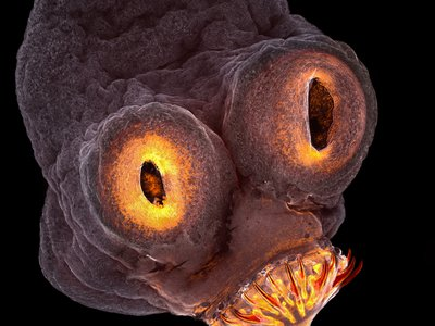 The glowing end of a tapeworm took fourth place in the competition. 200x magnification