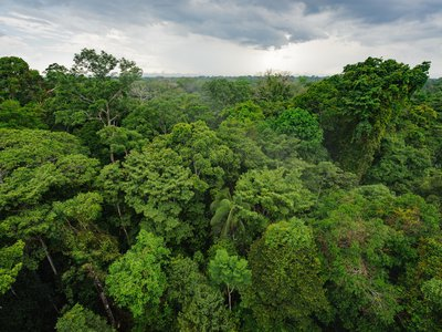 A new study suggests the lush, hyper-diverse rainforests of South America were shaped by the asteroid impact that killed off the dinosaurs.