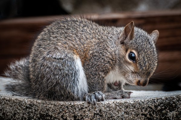 Peek-a-Boo Squirrel thumbnail