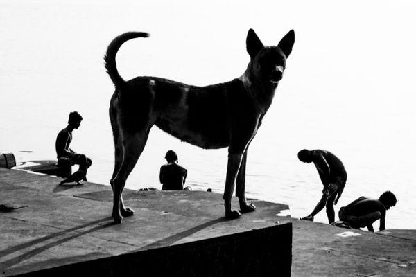 Dog and Men at Ghat thumbnail