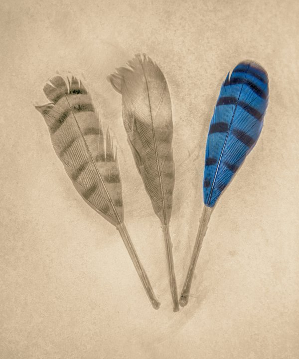 Three Feathers thumbnail