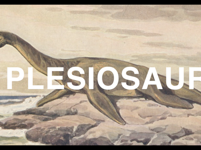 """Was the Loch Ness Monster a Plesiosaur? Smithsonian paleontologist, Hans Sues, answers your questions in the National Museum of Natural History's YouTube series, """"The Doctor Is In."""" (Smithsonian Institution)"""