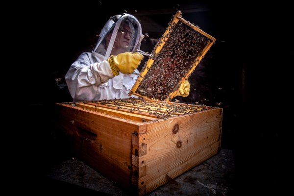 beekeeper's job thumbnail