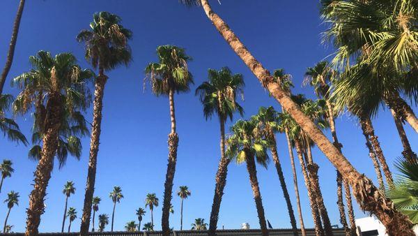 A thousand palms. thumbnail