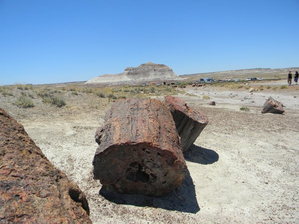 Petrified Forest thumbnail
