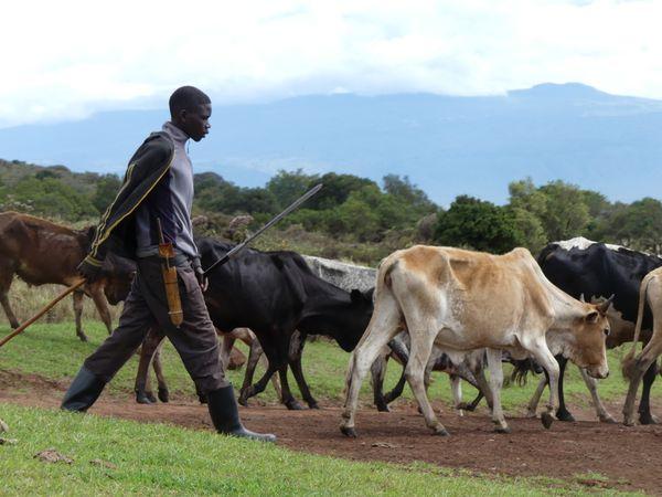 A Maasai herdsman  thumbnail