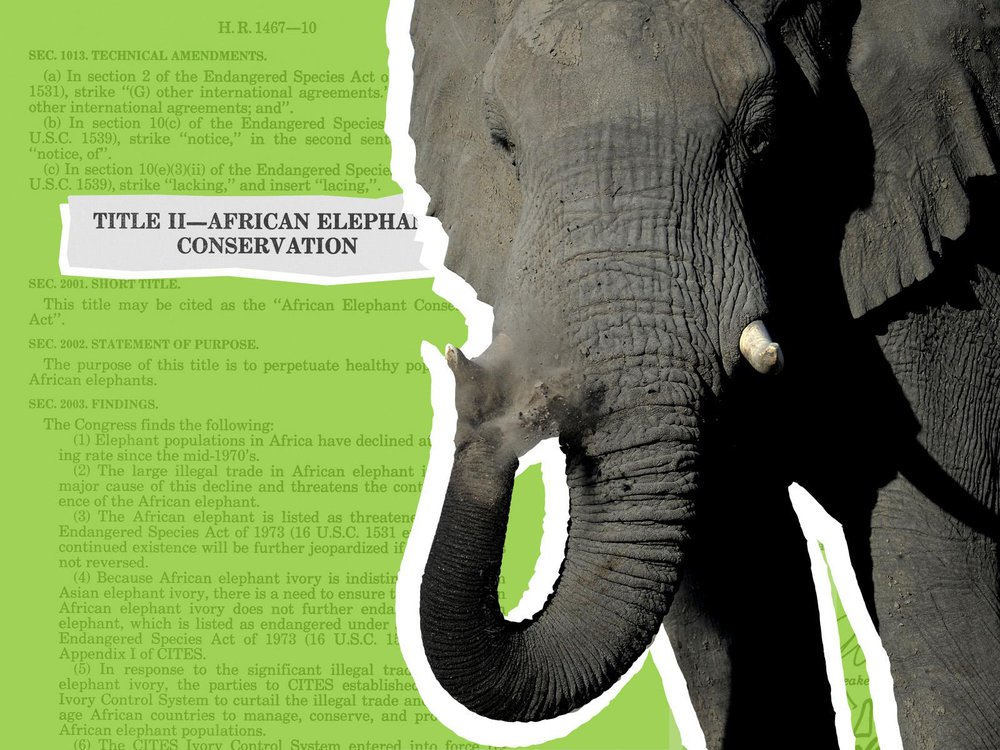 African Elephant Conservation Act