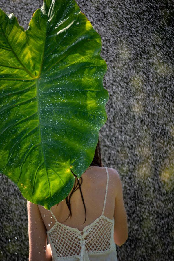 Girl using a leaf as an umbrella thumbnail