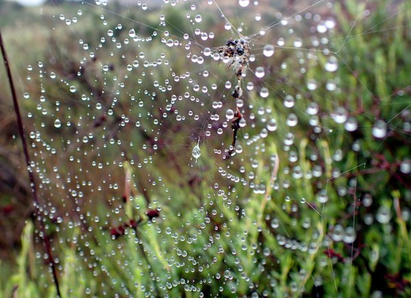 A Web of Droplets thumbnail