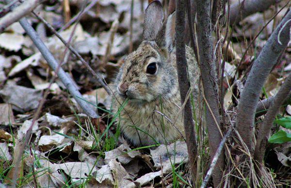 Rabbit In The Grass thumbnail