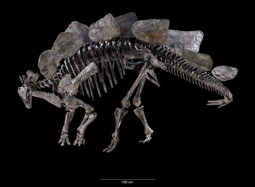 Amid All the Fossils, Smithsonian's New Dinosaur Exhibition Tells the Complex Story of Life
