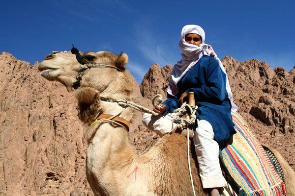 Bedouin man and camel on Mt.Sinai in Egypt thumbnail