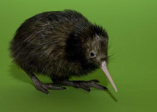 kiwibaby.jpg