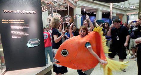 20110607022003splash-mob-orange-roughy.jpg