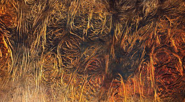 Tree Tunnel thumbnail