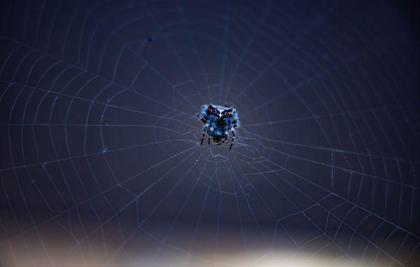Cute Blue Spider thumbnail