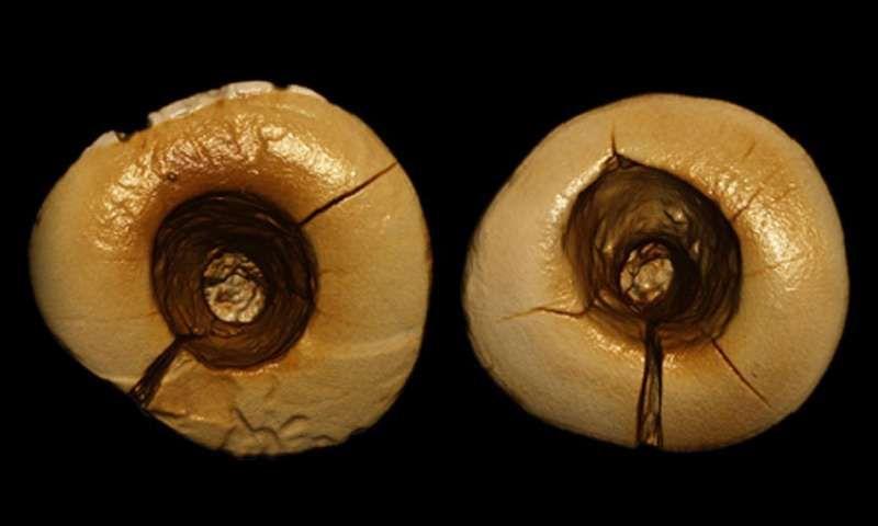 Ancient Cavity