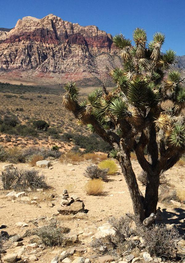 Joshua Tree near Red Rock Canyon Nevada thumbnail