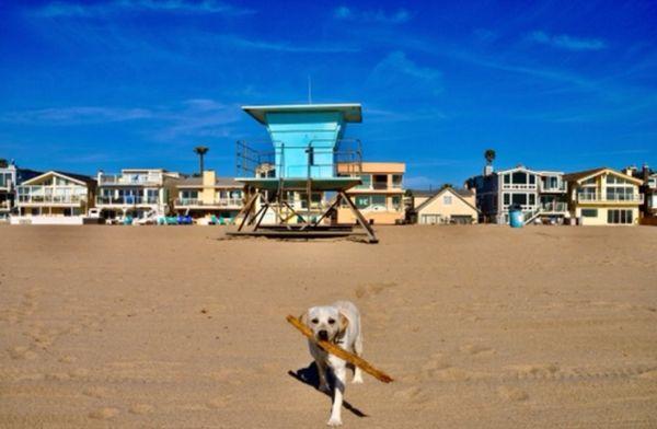 Dog on Ventura ca beach, beautiful colors thumbnail