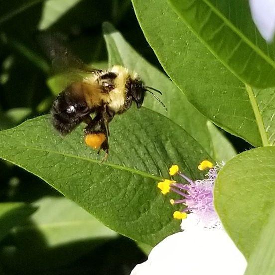 Busy Little Bee thumbnail
