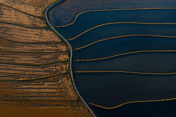 California Rice Patterns thumbnail