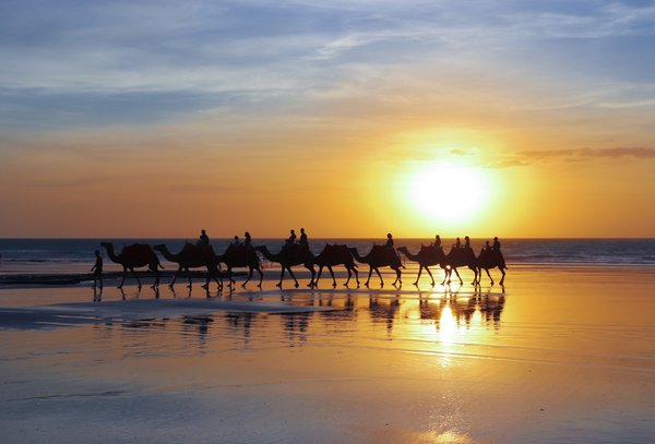 Camels on the beach thumbnail