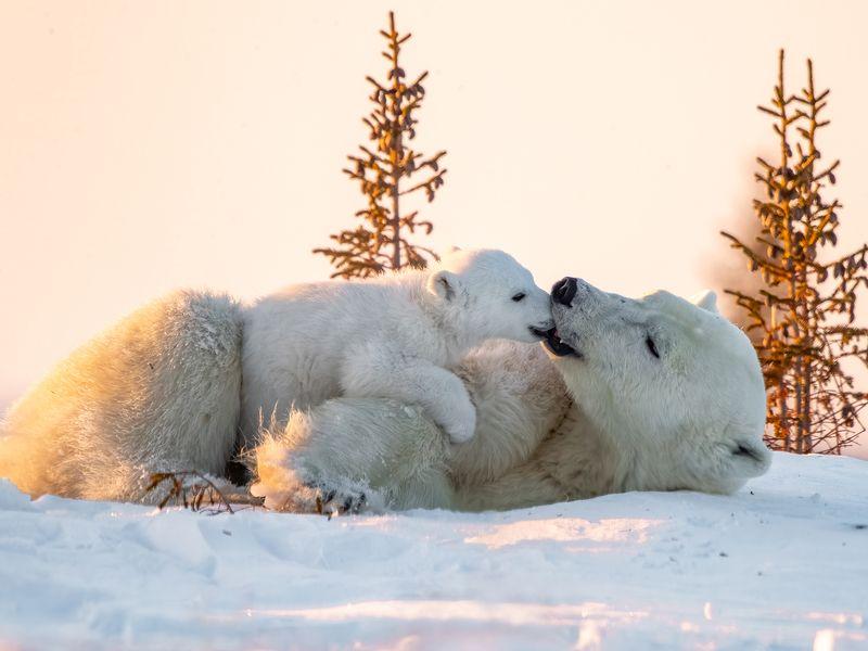 Frozen Kiss