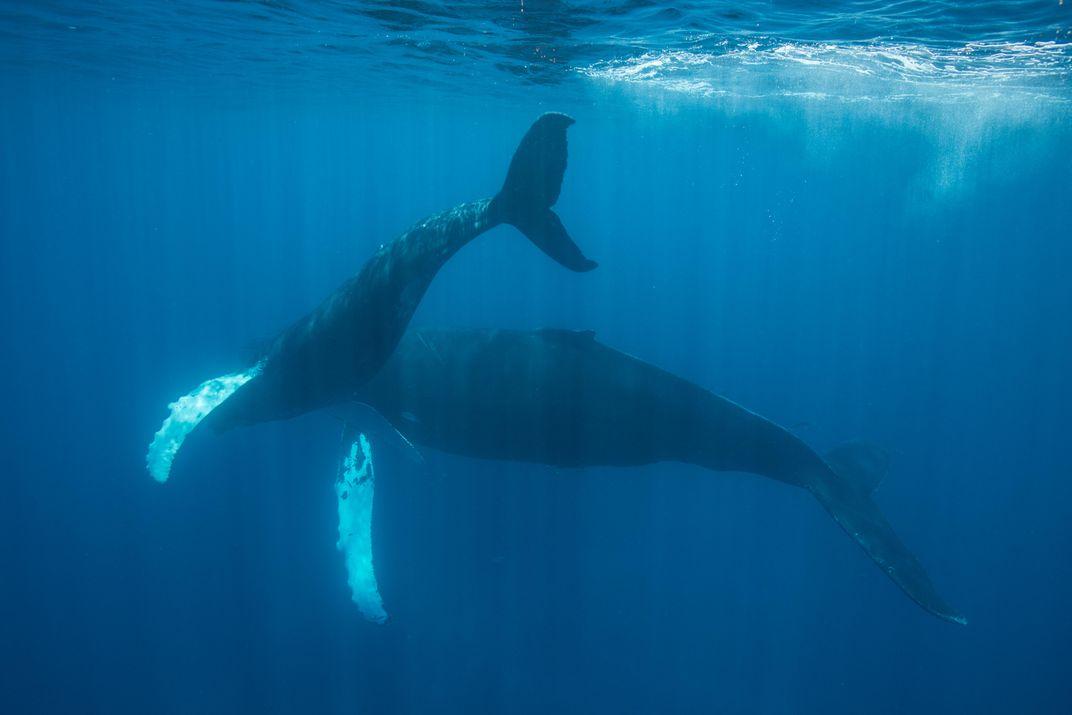 How to Spot a Hidden Whale