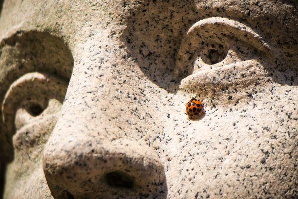 A Ladybug Tear thumbnail