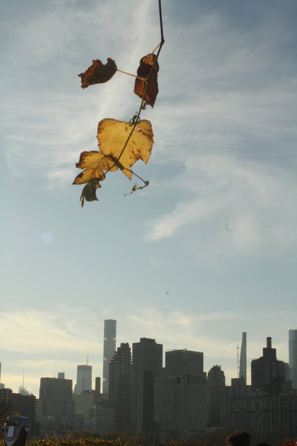 Last of the Autumn Leaves Dangling over the city thumbnail