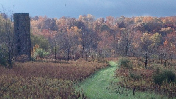 A Bald Eagle soaring over a Indiana Fall foliage morning while hunting whitetail deer.                                                                                      s  thumbnail