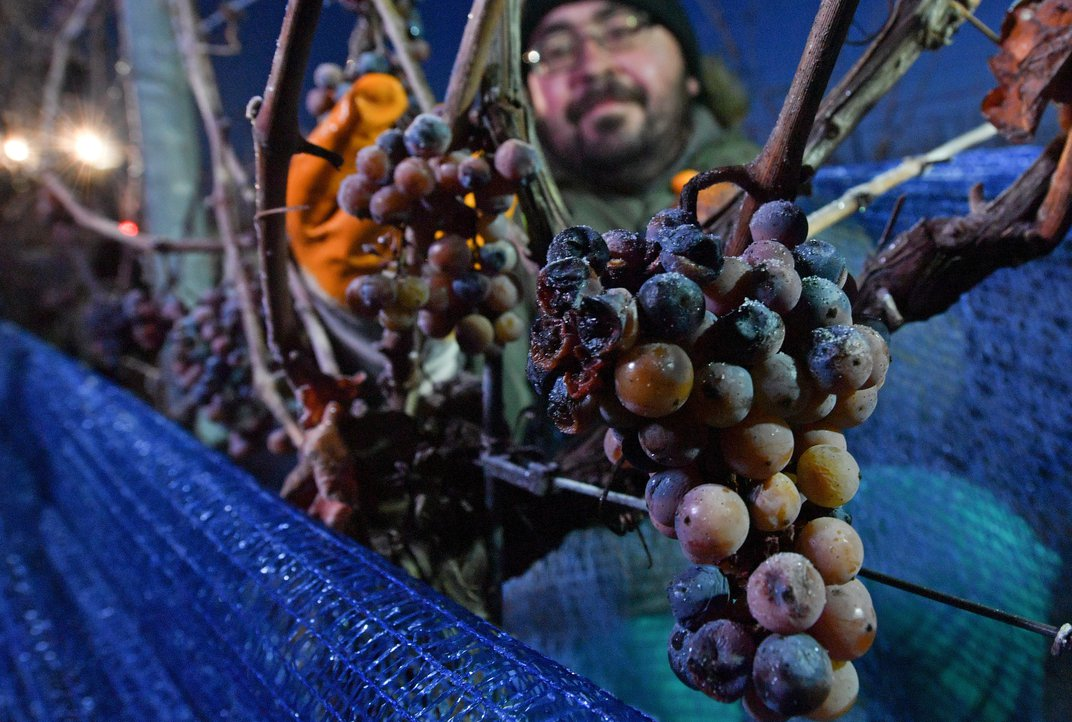 A Warm Winter Left Germany Unable to Produce Its Famed Ice Wines