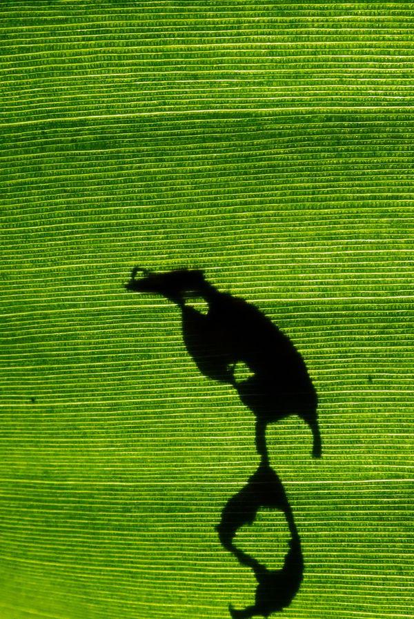 Green world bird thumbnail