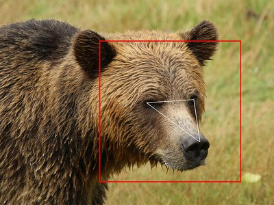 BearID uses characteristics like the distance between a bear's eyes, nose and forehead to match a face to a name.